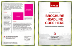 Academic Brand Brochure, Option 2, 11x17 Bifold, Exterior
